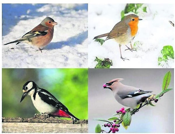 Christmas cards from Birdwatch Ireland.