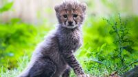 Cork's wildlife park closed for 'foreseeable future'
