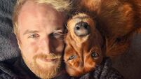 'Our Irish Red Setter has more facial expressions than most humans'