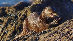 Cork Nature Network premiere short film on otters