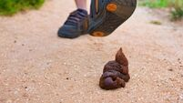 'Pick up the poop': County Hall considers 'reinvigorating' dog fouling awareness campaign