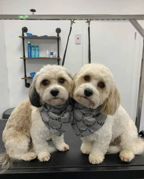 Happy clients: Ben and Jerry Cavachons