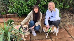 Housemates offer free dog walking service for City centre residents