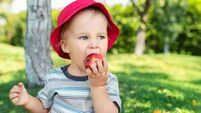 Portrait of happy Cute adorable toddler boy sitting on green grass and eating ripe juicy organic apple in fruit garden under tre