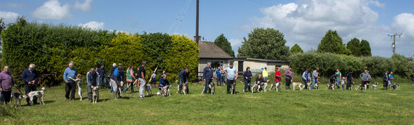 Letting off the dogs in the senior race at the Mayfield drag hunt at Whites Cross, Cork. Picture Dan Linehan