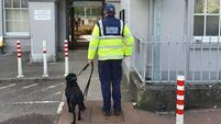 Cork Garda Dog Unit carry out successful patrol at Mallow Train Station