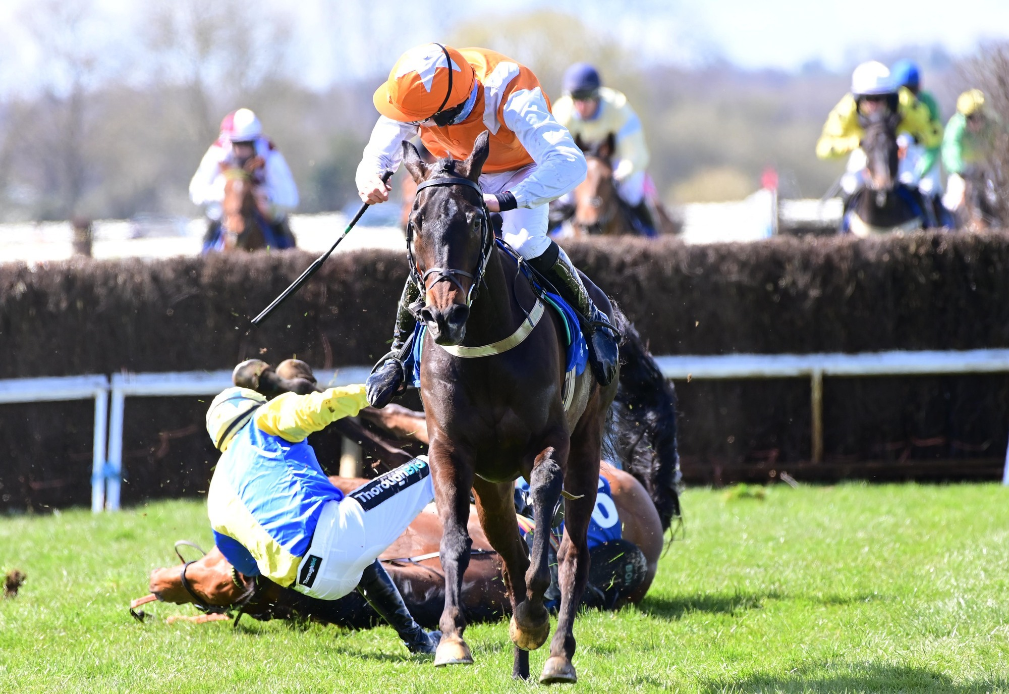 Scarlet Witch is a marvel in first point-to-point at Cork Racecourse since 1998