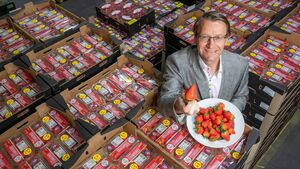 Fruitful season for strawberry suppliers